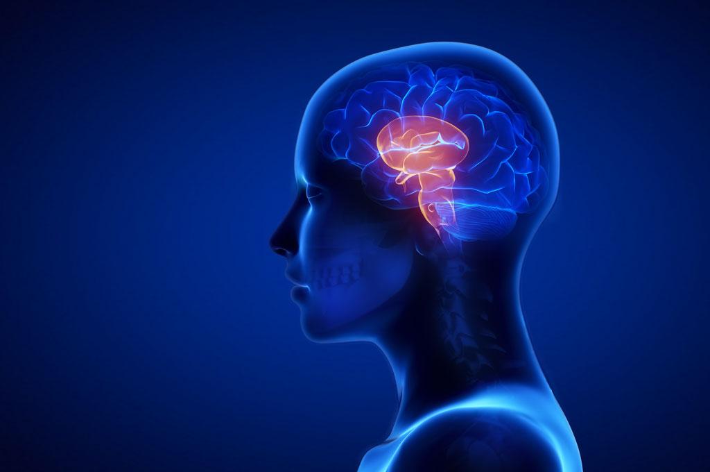 Рептильный мозг Термин